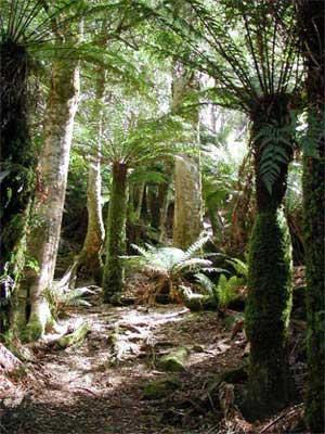 stockwerke des regenwaldes